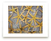 sea stars by Julie Hebert