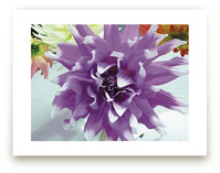 Watercolor Dahlia by A MAZ Design