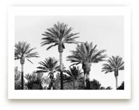 Laid Back Palms
