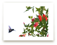 A hummingbird in action by Celia Maria