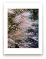 Alaska Flora by Salina Mack