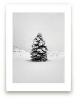 Tranquil Snow III