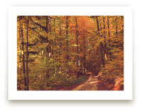 Fall in the Woods 1