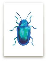 Cobalt Milkweed Beetle by Holly Whitcomb