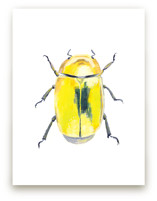 Golden Scarab Beetle by Holly Whitcomb