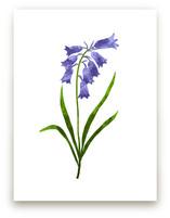 Bluebells Flowers