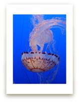 Jelly 2 by Jan Kessel