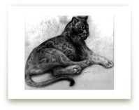 Resting Panther by Tracy Ann