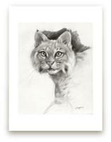 Bobcat Study by Tracy Ann