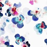 Floral petals romantic